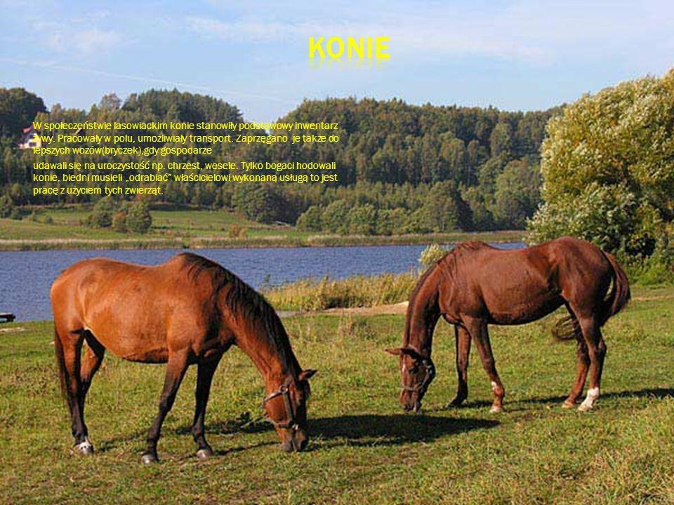 W społeczeństwie lasowiackim konie stanowiły podstawowy inwentarz żywy. Pracowały w polu, umożliwiały transport. Zaprzęgano je także do lepszych wozów