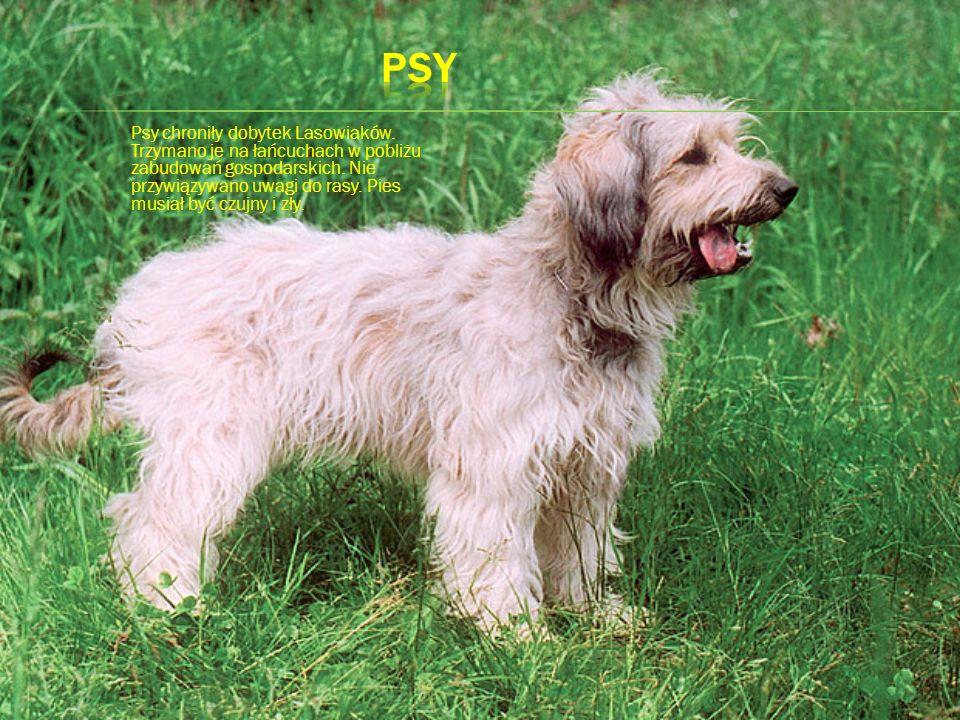 Psy chroniły dobytek Lasowiaków. Trzymano je na łańcuchach w pobliżu zabudowań gospodarskich. Nie przywiązywano uwagi do rasy. Pies musiał być czujny