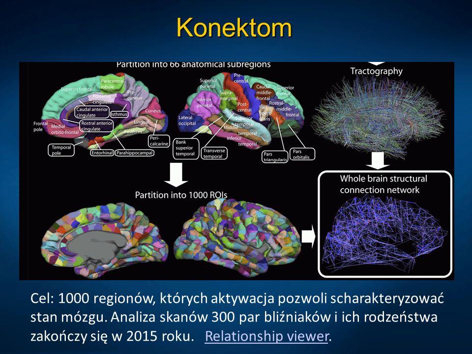 Konektom Cel: 1000 regionów, których aktywacja pozwoli scharakteryzować stan mózgu. Analiza skanów 300 par bliźniaków i ich rodzeństwa zakończy się w