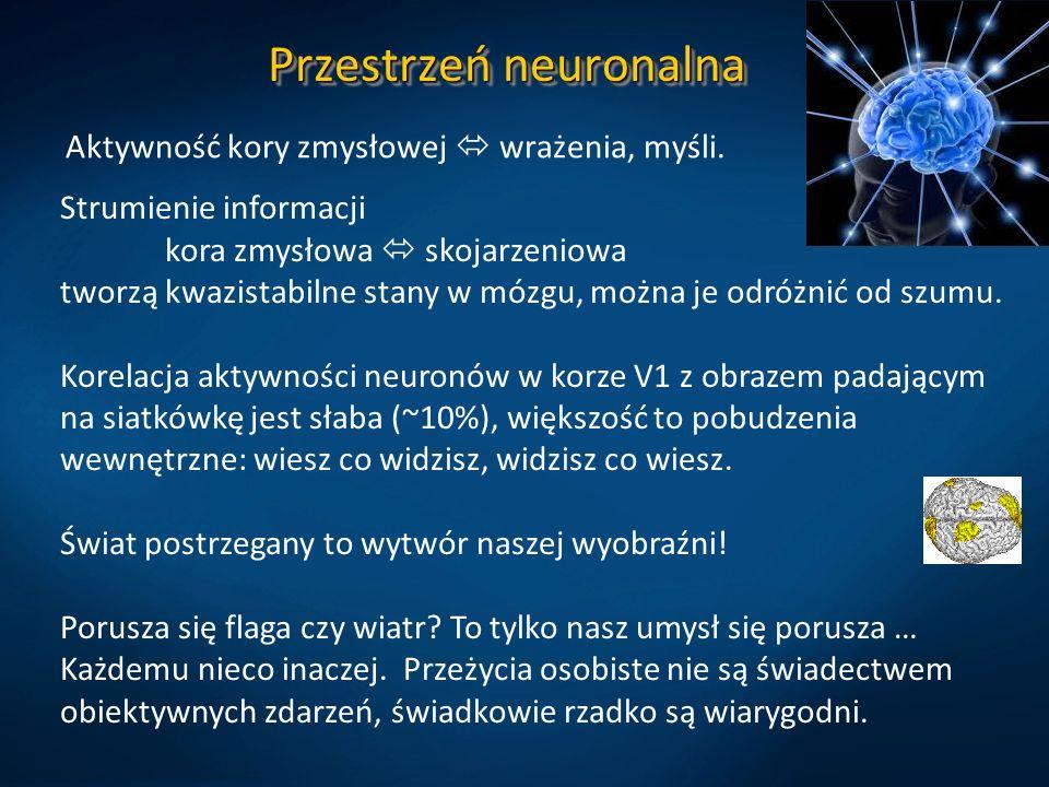 Przestrzeń neuronalna Aktywność kory zmysłowej wrażenia, myśli. Strumienie informacji kora zmysłowa skojarzeniowa tworzą kwazistabilne stany w mózgu,