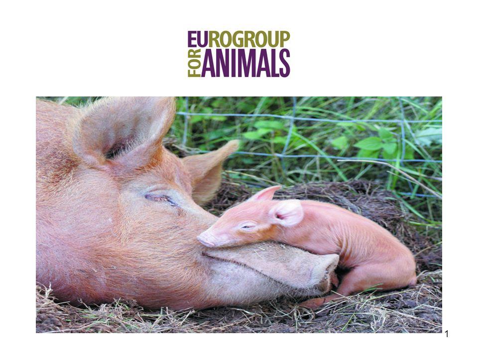 2 Od czasu utworzenia w roku 1980, działa na rzecz poprawy traktowania i warunków utrzymywania zwierząt w całej UE.