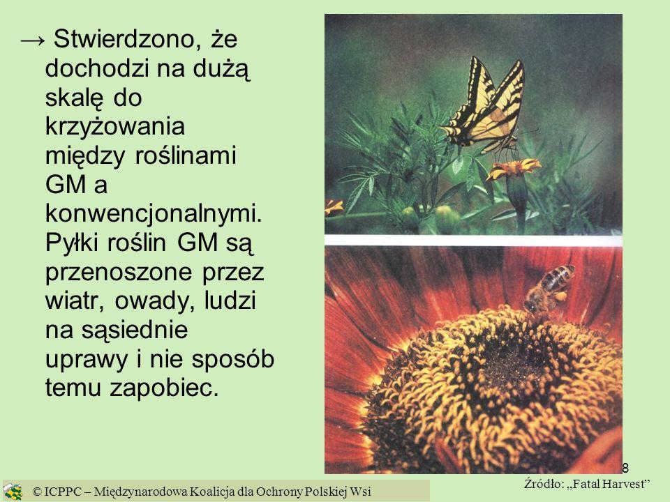 18 Stwierdzono, że dochodzi na dużą skalę do krzyżowania między roślinami GM a konwencjonalnymi. Pyłki roślin GM są przenoszone przez wiatr, owady, lu