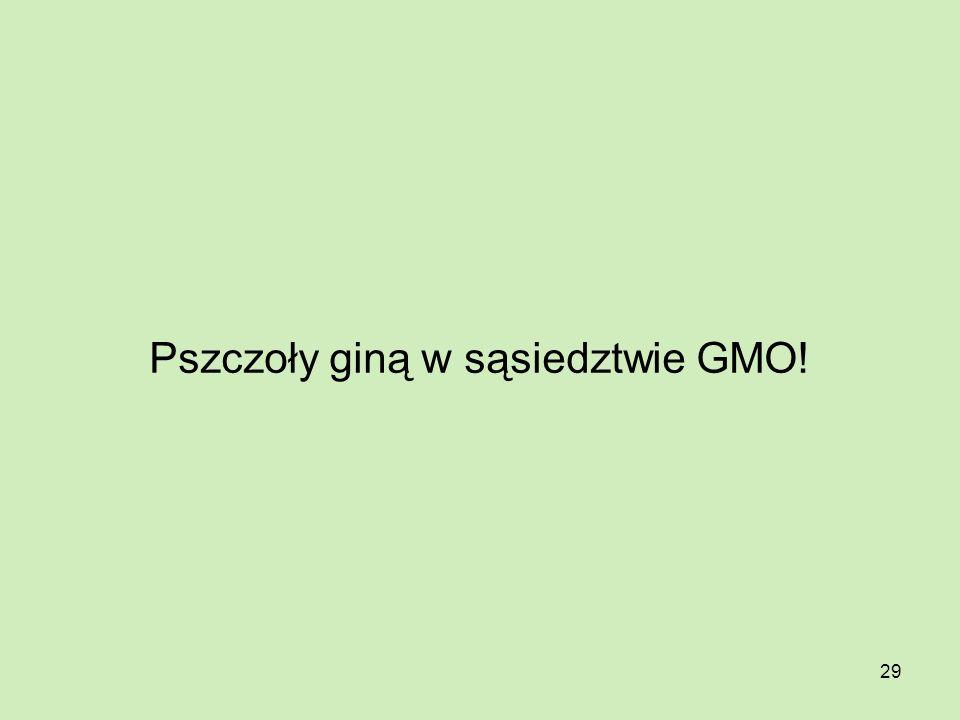 29 Pszczoły giną w sąsiedztwie GMO!