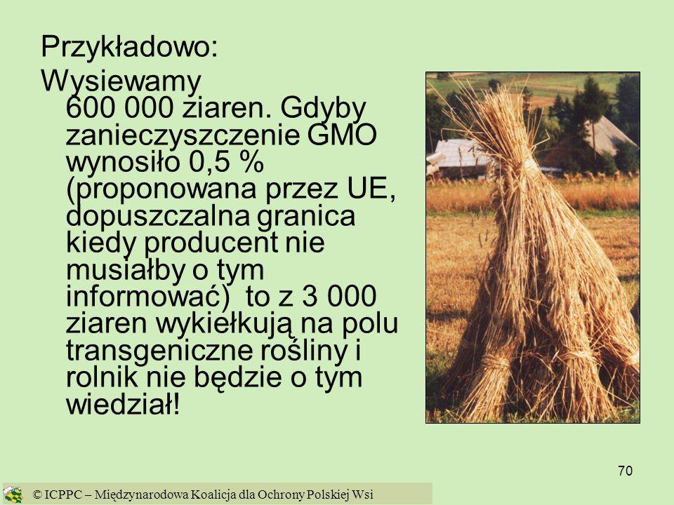 70 Przykładowo: Wysiewamy 600 000 ziaren. Gdyby zanieczyszczenie GMO wynosiło 0,5 % (proponowana przez UE, dopuszczalna granica kiedy producent nie mu