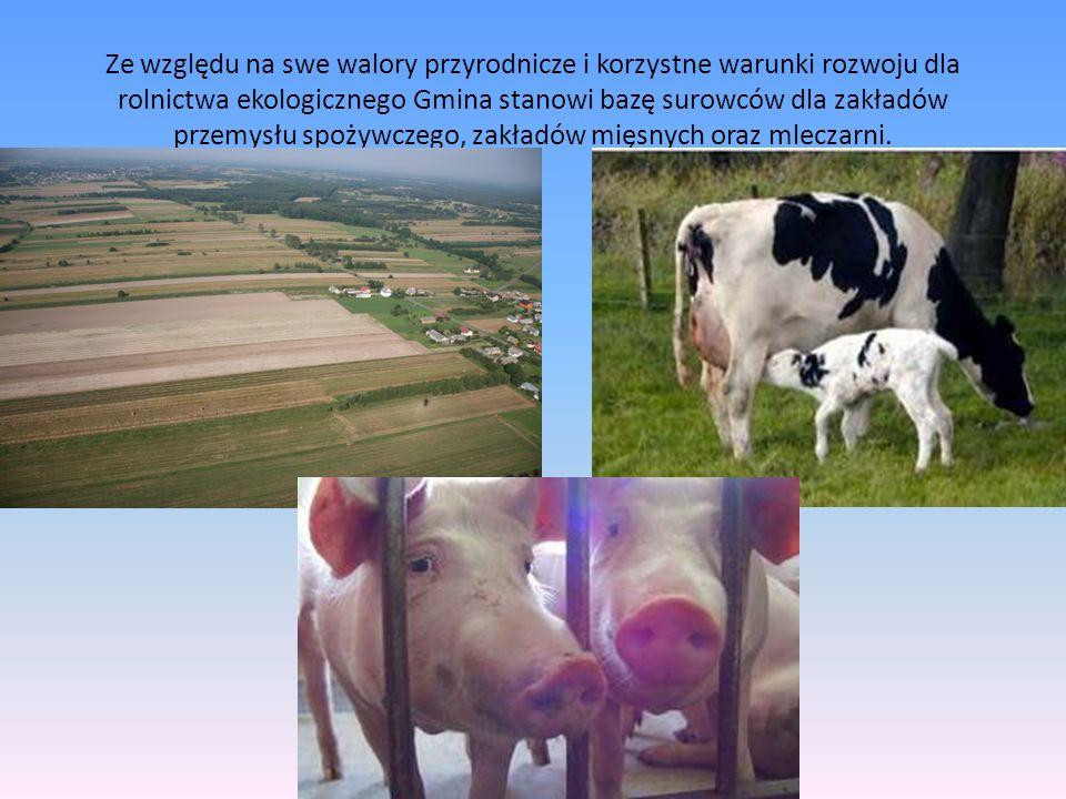 Ze względu na swe walory przyrodnicze i korzystne warunki rozwoju dla rolnictwa ekologicznego Gmina stanowi bazę surowców dla zakładów przemysłu spoży
