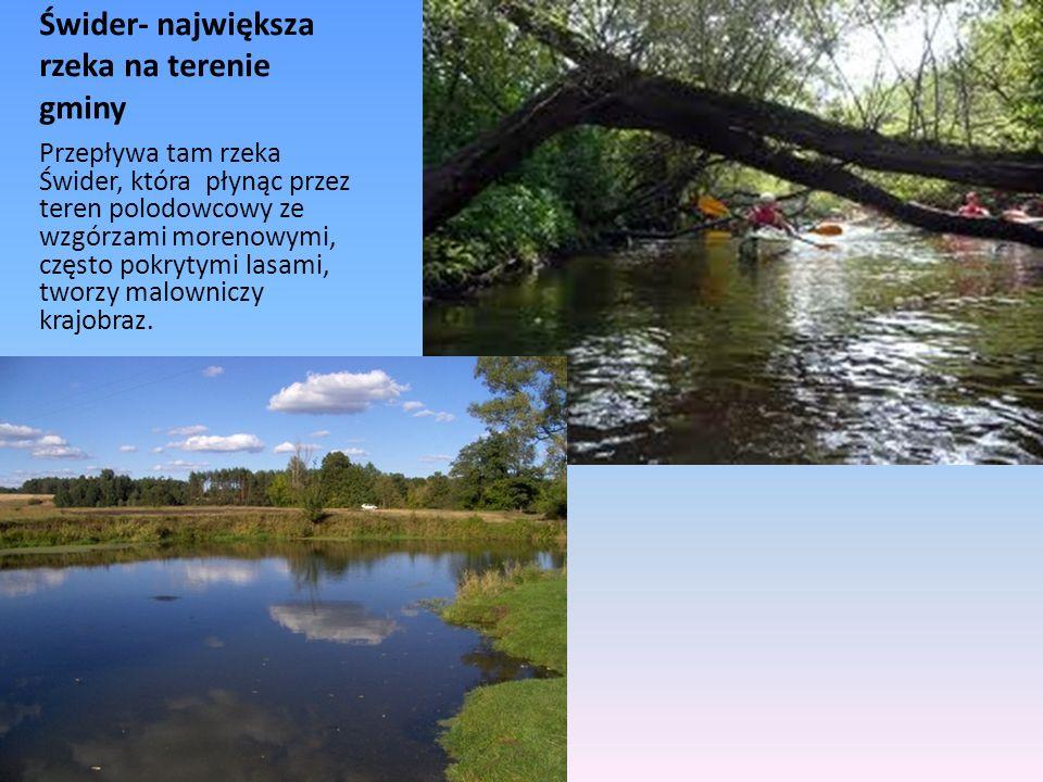 Świder- największa rzeka na terenie gminy Przepływa tam rzeka Świder, która płynąc przez teren polodowcowy ze wzgórzami morenowymi, często pokrytymi l