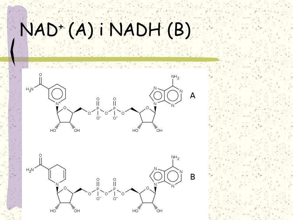 NAD + (A) i NADH (B)