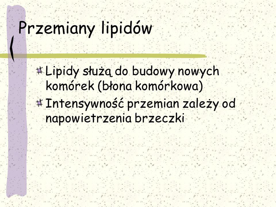 Przemiany lipidów Lipidy służą do budowy nowych komórek (błona komórkowa) Intensywność przemian zależy od napowietrzenia brzeczki