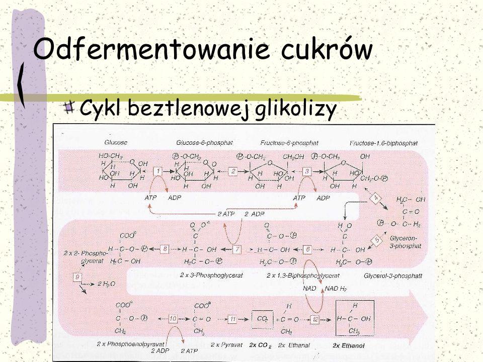 Odfermentowanie cukrów 1.Fosforylacja glukozy 2.Izomeryzacja do 6-fosforanu fruktozy heksokinaza Izomeraza fosforanu glukozy ATP – adenozynotrifosforan