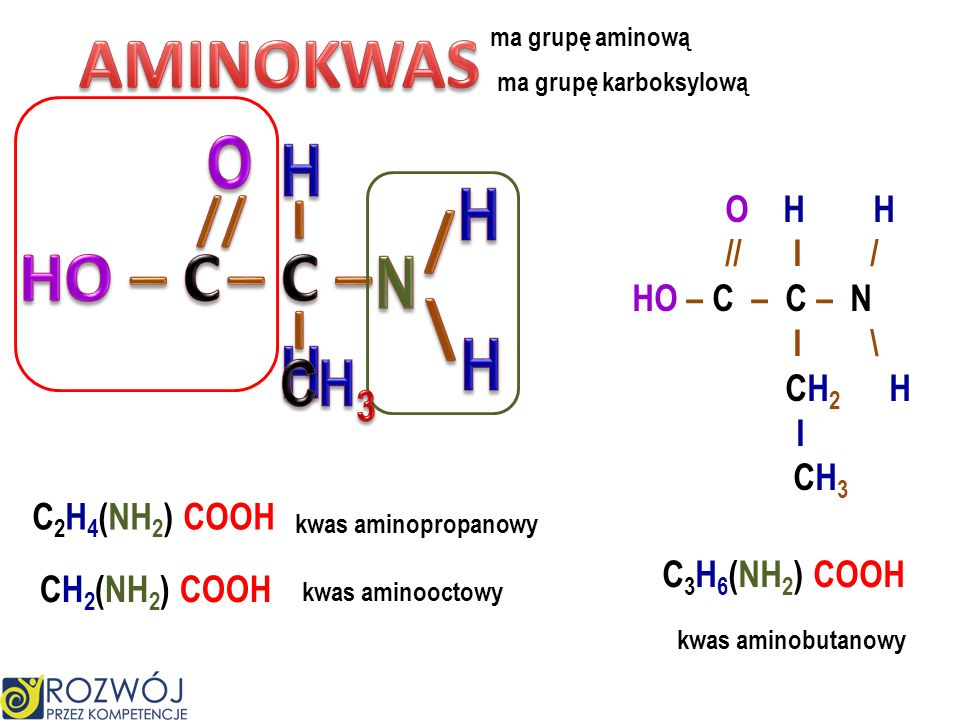 rodnik grupa aminowa najprostsza amina metyloamina