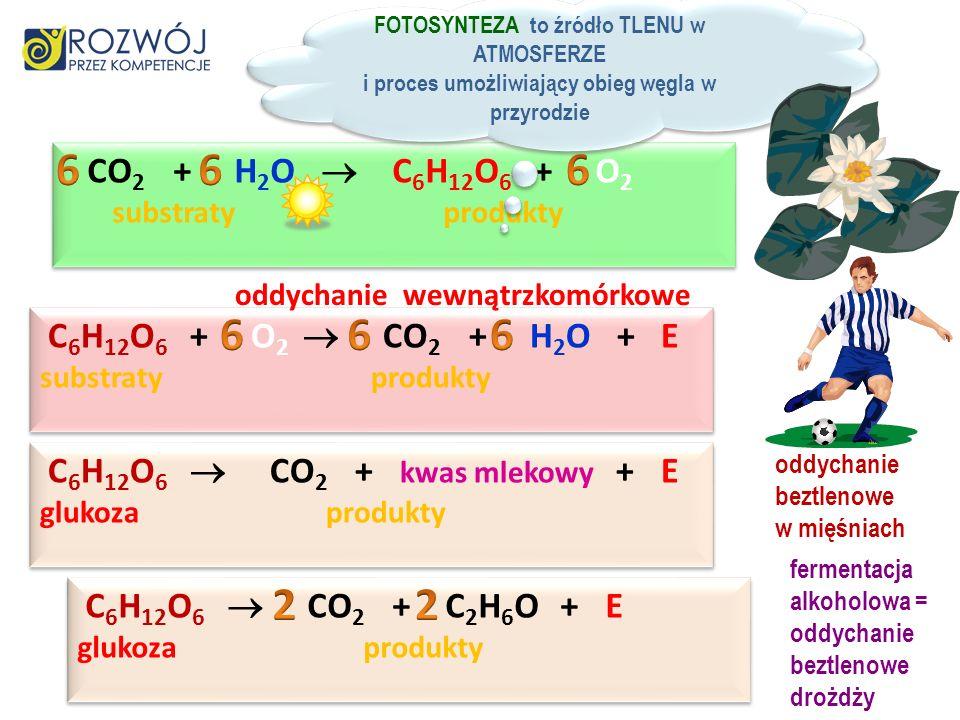 CO 2 + H 2 O C 6 H 12 O 6 + O 2 substraty produkty CO 2 + H 2 O C 6 H 12 O 6 + O 2 substraty produkty FOTOSYNTEZA to źródło TLENU w ATMOSFERZE i proces umożliwiający obieg węgla w przyrodzie FOTOSYNTEZA to źródło TLENU w ATMOSFERZE i proces umożliwiający obieg węgla w przyrodzie C 6 H 12 O 6 + O 2 CO 2 + H 2 O + E substraty produkty C 6 H 12 O 6 CO 2 + kwas mlekowy + E glukoza produkty oddychanie wewnątrzkomórkowe oddychanie beztlenowe w mięśniach C 6 H 12 O 6 CO 2 + C 2 H 6 O + E glukoza produkty fermentacja alkoholowa = oddychanie beztlenowe drożdży