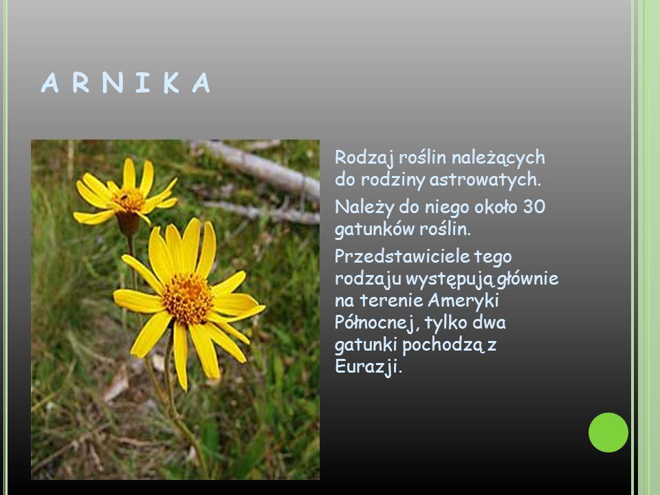 A R N I K A Rodzaj roślin należących do rodziny astrowatych. Należy do niego około 30 gatunków roślin. Przedstawiciele tego rodzaju występują głównie