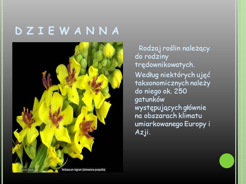 D Z I E W A N N A Rodzaj roślin należący do rodziny trędownikowatych. Według niektórych ujęć taksonomicznych należy do niego ok. 250 gatunków występuj
