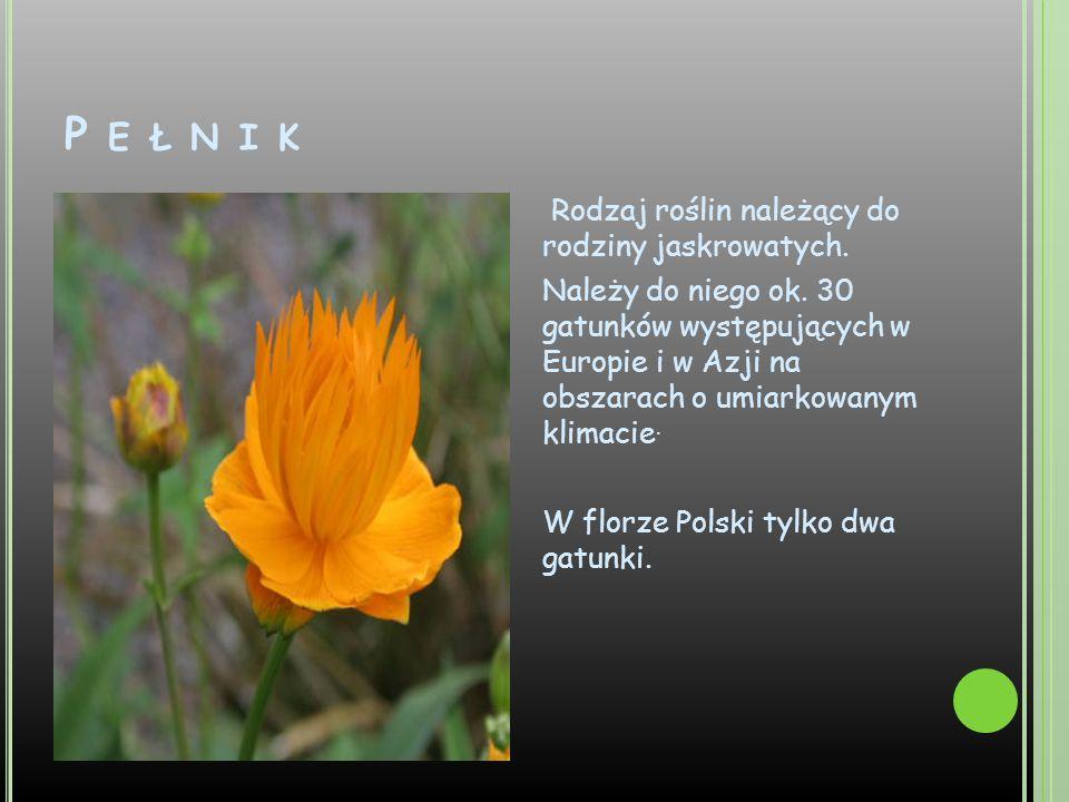 P E Ł N I K Rodzaj roślin należący do rodziny jaskrowatych. Należy do niego ok. 30 gatunków występujących w Europie i w Azji na obszarach o umiarkowan