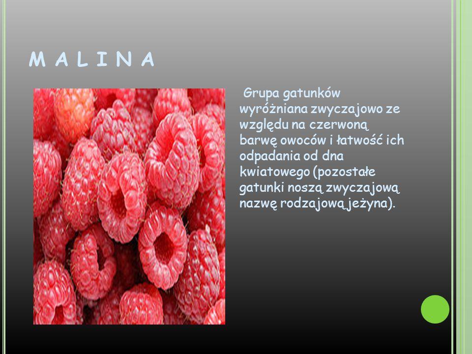 M A L I N A Grupa gatunków wyróżniana zwyczajowo ze względu na czerwoną barwę owoców i łatwość ich odpadania od dna kwiatowego (pozostałe gatunki nosz