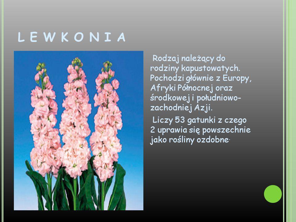 L E W K O N I A Rodzaj należący do rodziny kapustowatych. Pochodzi głównie z Europy, Afryki Północnej oraz środkowej i południowo- zachodniej Azji. Li