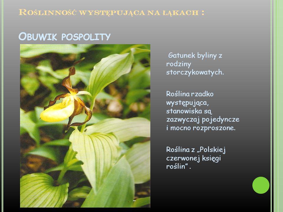 R O Ś LINNO ŚĆ WYST Ę PUJ Ą CA NA ŁĄ KACH : O BUWIK POSPOLITY Gatunek byliny z rodziny storczykowatych. Roślina rzadko występująca, stanowiska są zazw