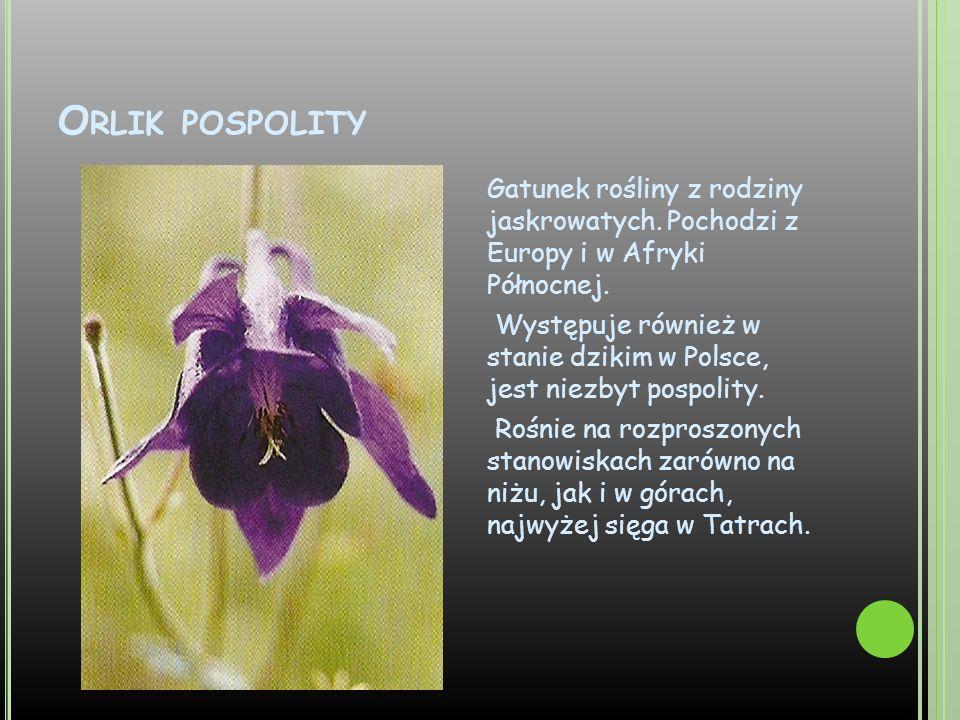 O RLIK POSPOLITY Gatunek rośliny z rodziny jaskrowatych. Pochodzi z Europy i w Afryki Północnej. Występuje również w stanie dzikim w Polsce, jest niez