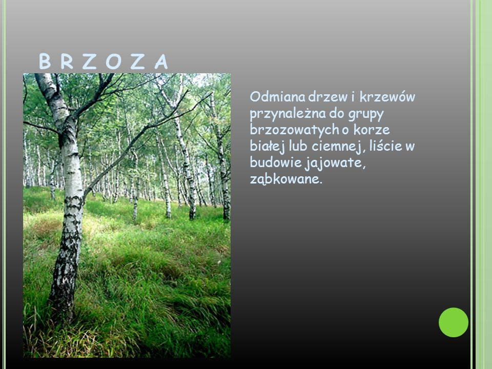B R Z O Z A Odmiana drzew i krzewów przynależna do grupy brzozowatych o korze białej lub ciemnej, liście w budowie jajowate, ząbkowane.