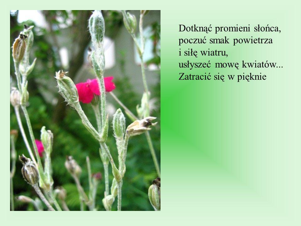 Dotknąć promieni słońca, poczuć smak powietrza i siłę wiatru, usłyszeć mowę kwiatów...
