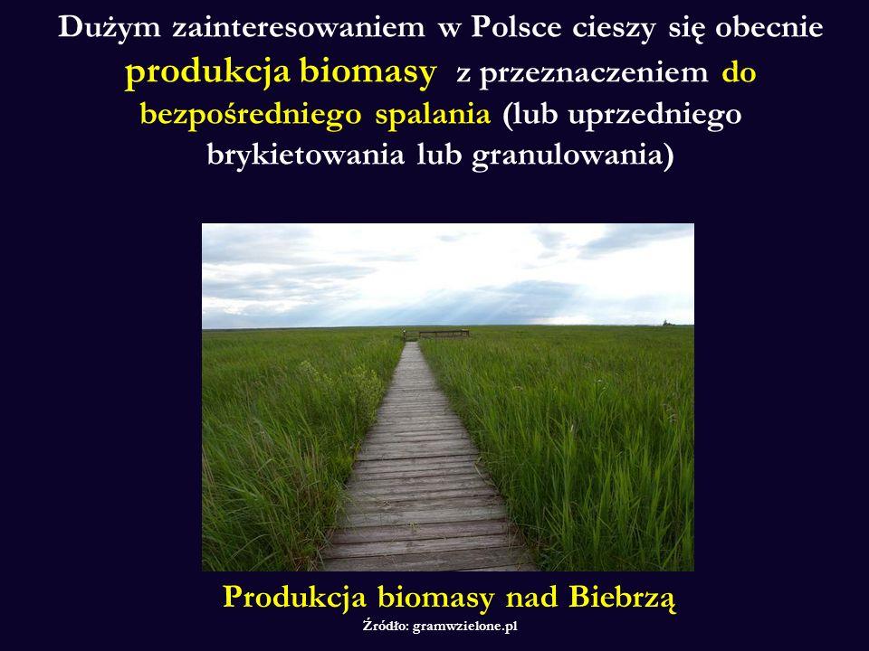 Dużym zainteresowaniem w Polsce cieszy się obecnie produkcja biomasy z przeznaczeniem do bezpośredniego spalania (lub uprzedniego brykietowania lub granulowania) Produkcja biomasy nad Biebrzą Źródło: gramwzielone.pl