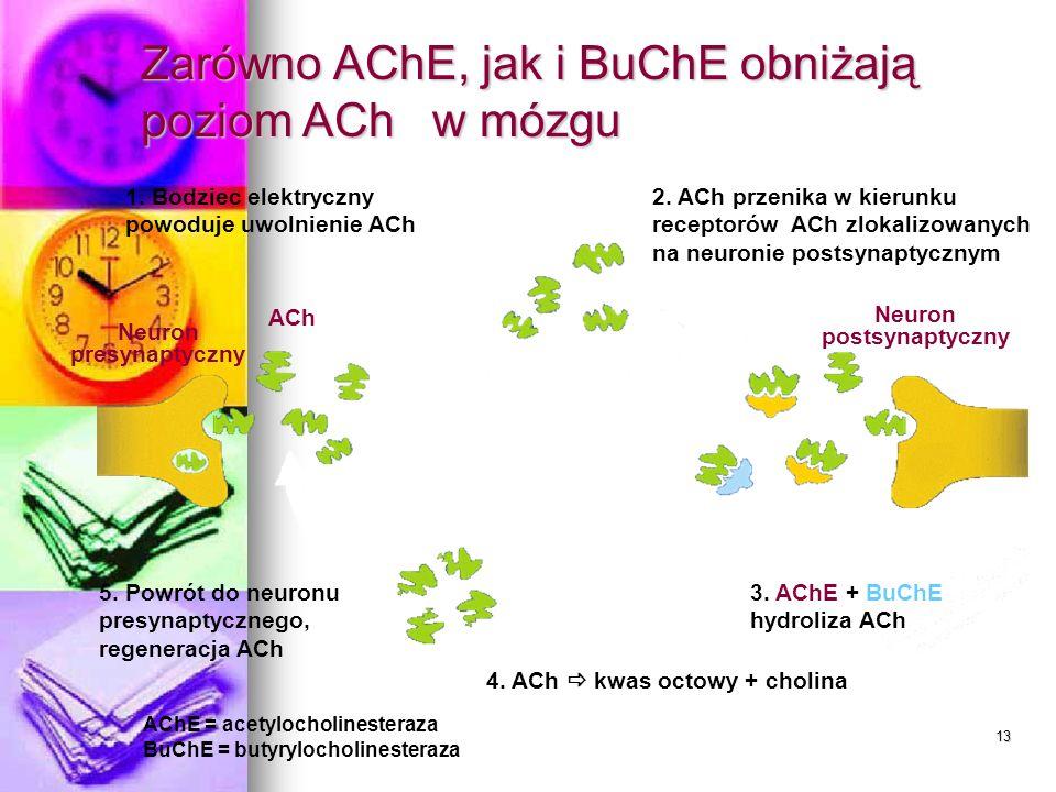 13 Zarówno AChE, jak i BuChE obniżają poziom ACh w mózgu 3. AChE + BuChE hydroliza ACh 1. Bodziec elektryczny powoduje uwolnienie ACh 2. ACh przenika