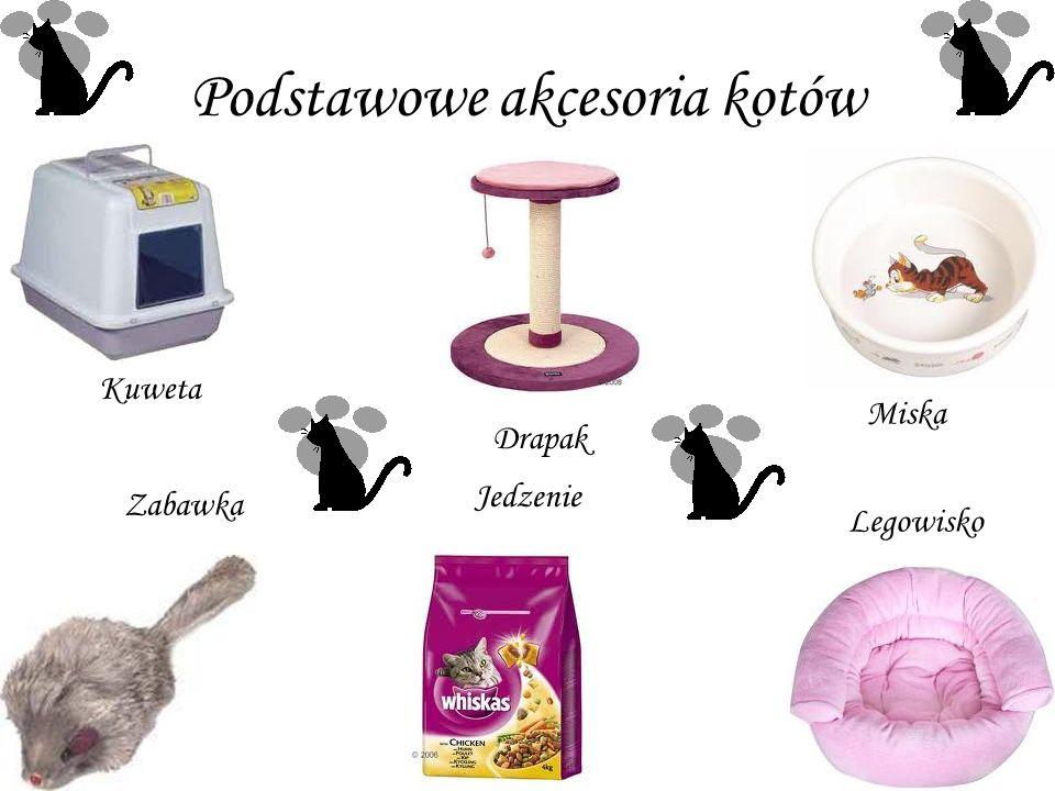 Podstawowe akcesoria kotów Kuweta Drapak Miska Zabawka Jedzenie Legowisko