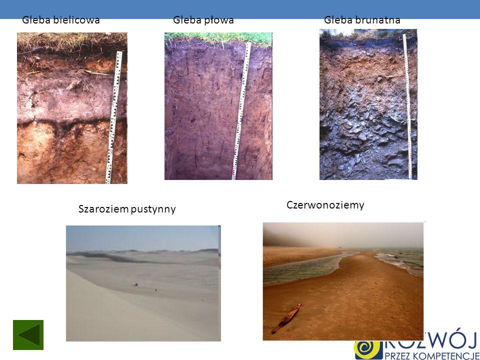 Gleba bielicowaGleba płowaGleba brunatna Szaroziem pustynny Czerwonoziemy