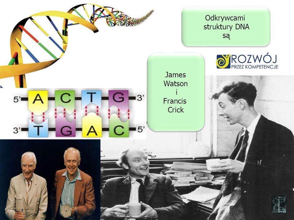 Odkrywcami struktury DNA są Odkrywcami struktury DNA są James Watson i Francis Crick James Watson i Francis Crick