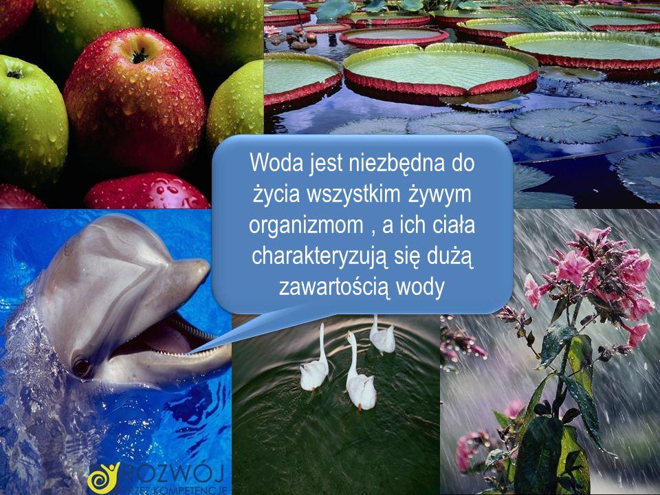Woda jest niezbędna do życia wszystkim żywym organizmom, a ich ciała charakteryzują się dużą zawartością wody