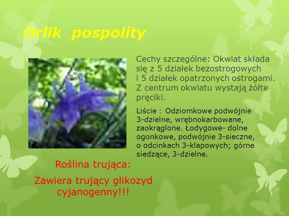 Orlik pospolity Roślina trująca: Zawiera trujący glikozyd cyjanogenny!!! Cechy szczególne: Okwiat składa się z 5 działek bezostrogowych i 5 działek op