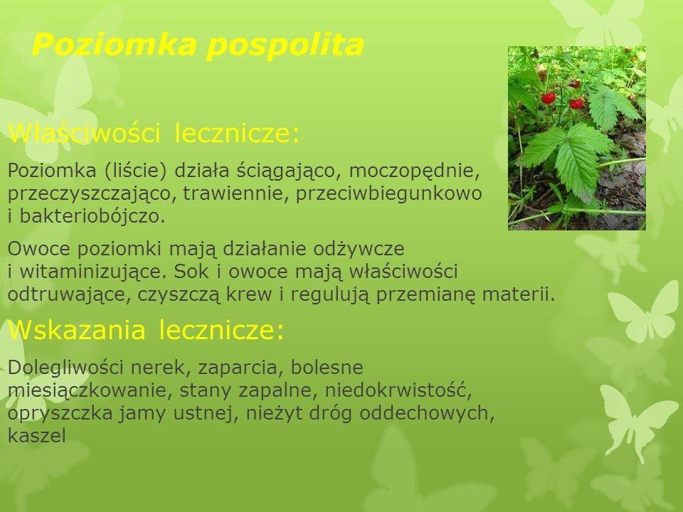 Poziomka pospolita Właściwości lecznicze: Poziomka (liście) działa ściągająco, moczopędnie, przeczyszczająco, trawiennie, przeciwbiegunkowo i bakterio
