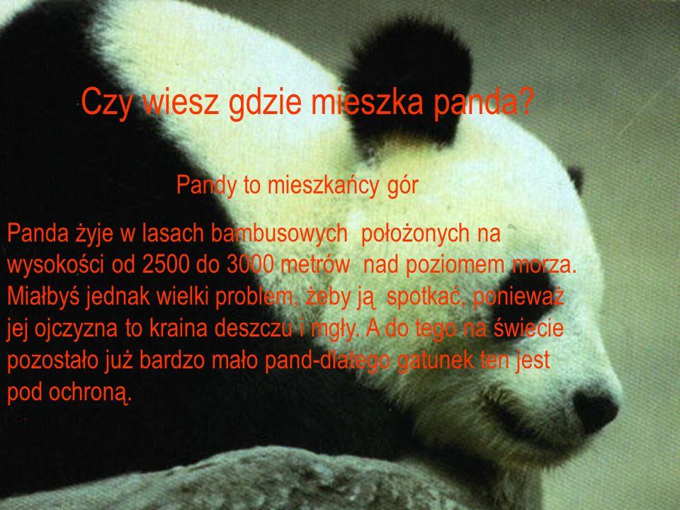 Czy wiesz gdzie mieszka panda? Pandy to mieszkańcy gór Panda żyje w lasach bambusowych położonych na wysokości od 2500 do 3000 metrów nad poziomem mor