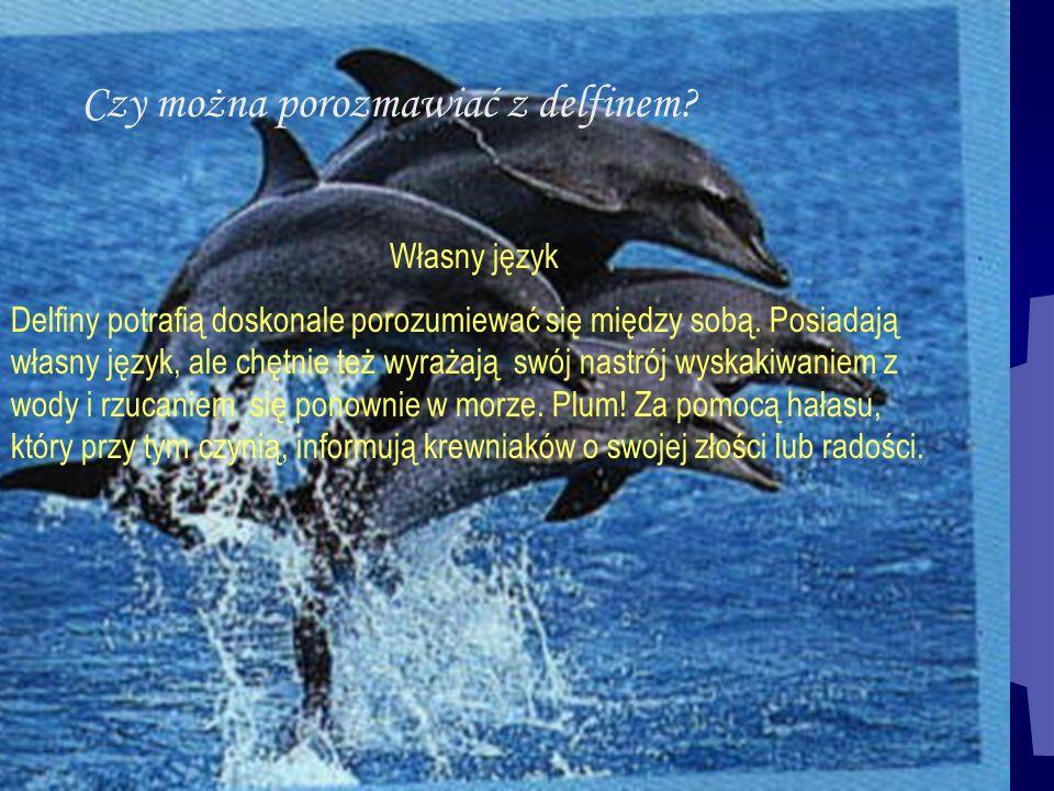 Czy można porozmawiać z delfinem? Własny język Delfiny potrafią doskonale porozumiewać się między sobą. Posiadają własny język, ale chętnie też wyraża