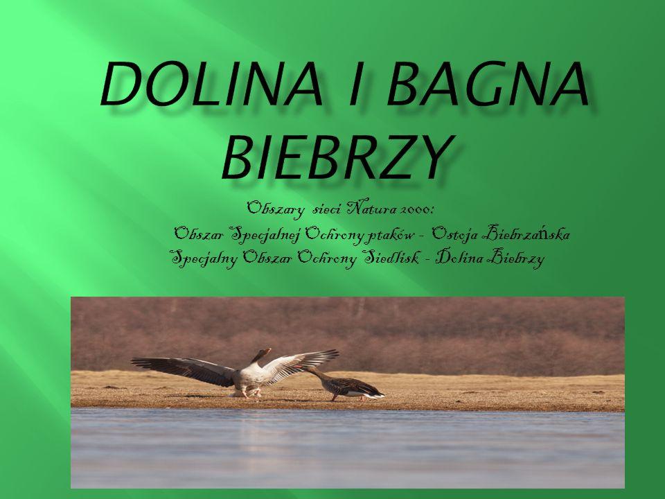 Obszary sieci Natura 2000: Obszar Specjalnej Ochrony ptaków - Ostoja Biebrza ń ska Specjalny Obszar Ochrony Siedlisk - Dolina Biebrzy