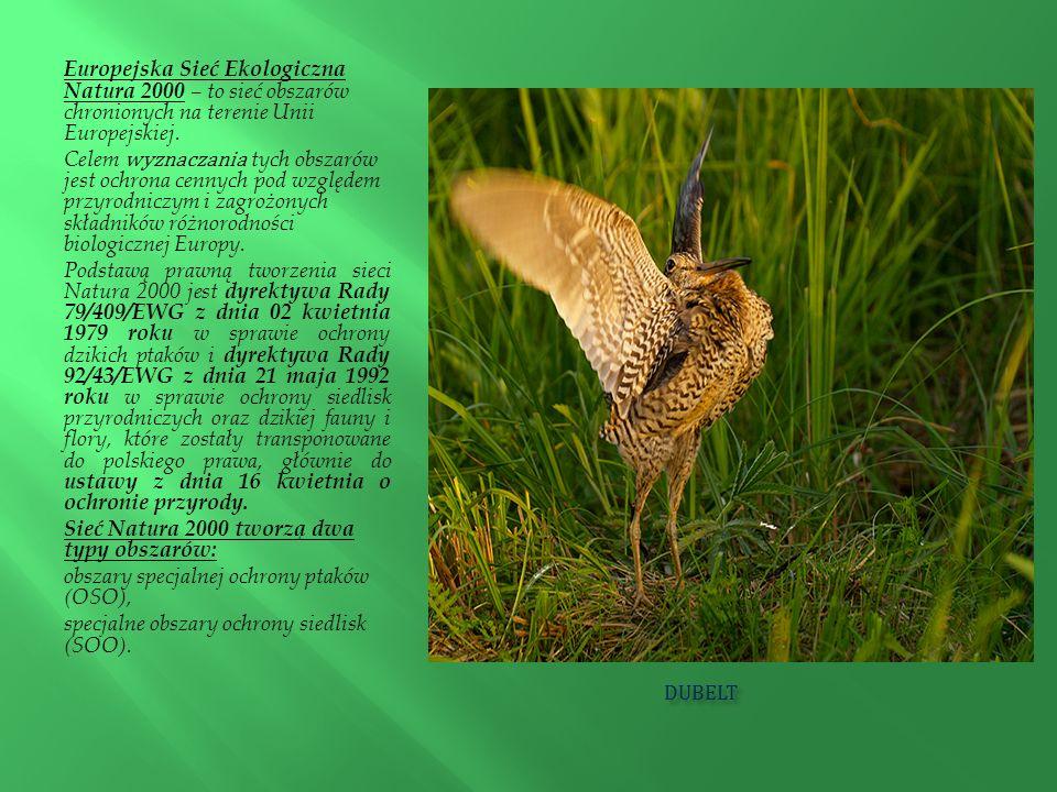 DUBELT DUBELT Europejska Sieć Ekologiczna Natura 2000 – to sieć obszarów chronionych na terenie Unii Europejskiej. Celem wyznaczania tych obszarów jes