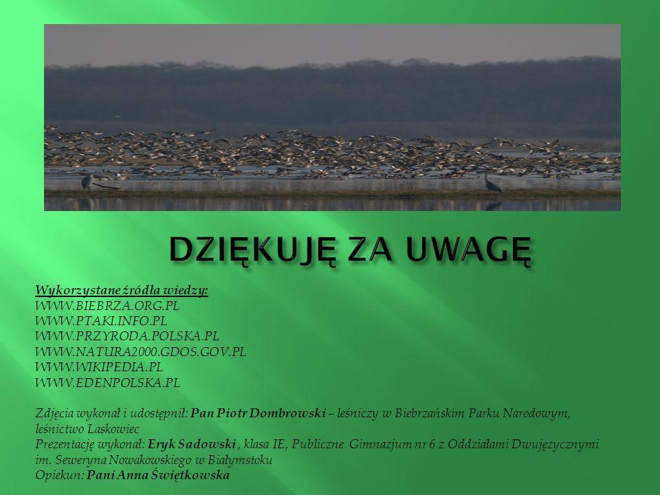 Wykorzystane źródła wiedzy: WWW.BIEBRZA.ORG.PL WWW.PTAKI.INFO.PL WWW.PRZYRODA.POLSKA.PL WWW.NATURA2000.GDOS.GOV.PL WWW.WIKIPEDIA.PL WWW.EDENPOLSKA.PL