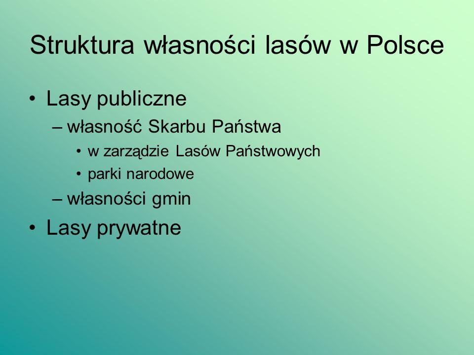 Struktura własności lasów w Polsce Lasy publiczne –własność Skarbu Państwa w zarządzie Lasów Państwowych parki narodowe –własności gmin Lasy prywatne