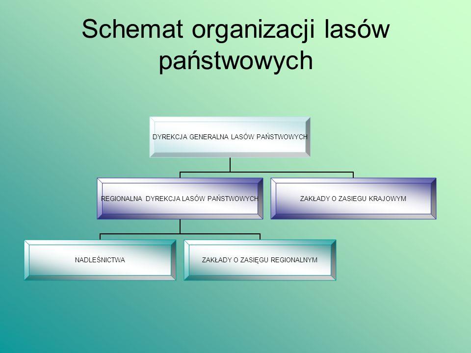 Zasoby lasów w Polsce W przeszłości lasy występowały niemal na całym obszarze naszego kraju.