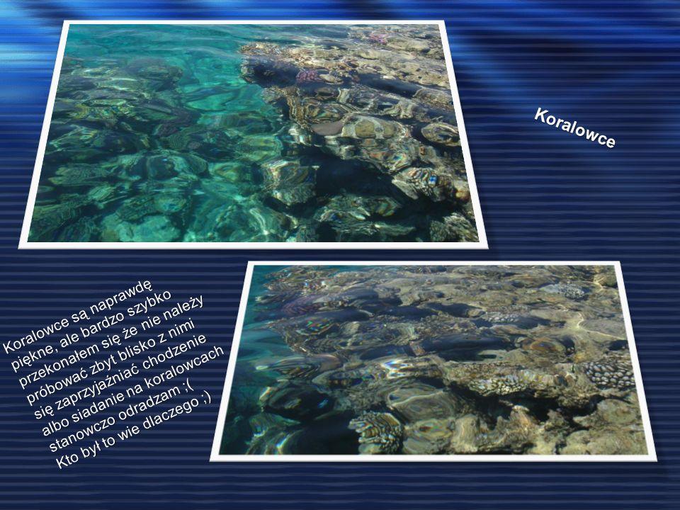 Koralowce Koralowce są naprawdę piękne, ale bardzo szybko przekonałem się że nie należy próbować zbyt blisko z nimi się zaprzyjaźniać chodzenie albo siadanie na koralowcach stanowczo odradzam ;( Kto był to wie dlaczego ;)