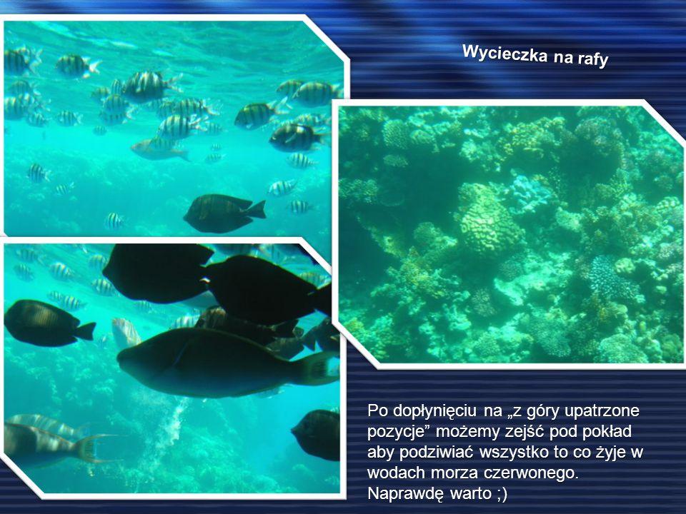 Wycieczka na rafy Po dopłynięciu na z góry upatrzone pozycje możemy zejść pod pokład aby podziwiać wszystko to co żyje w wodach morza czerwonego.
