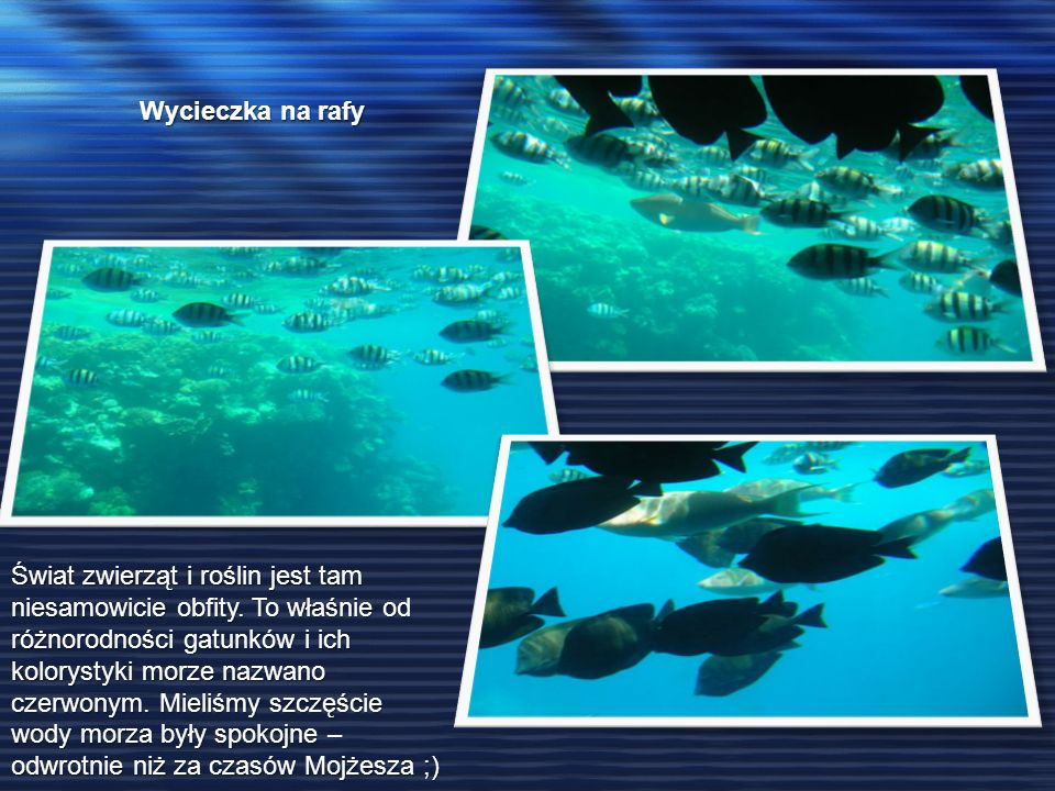 Wycieczka na rafy Świat zwierząt i roślin jest tam niesamowicie obfity. To właśnie od różnorodności gatunków i ich kolorystyki morze nazwano czerwonym