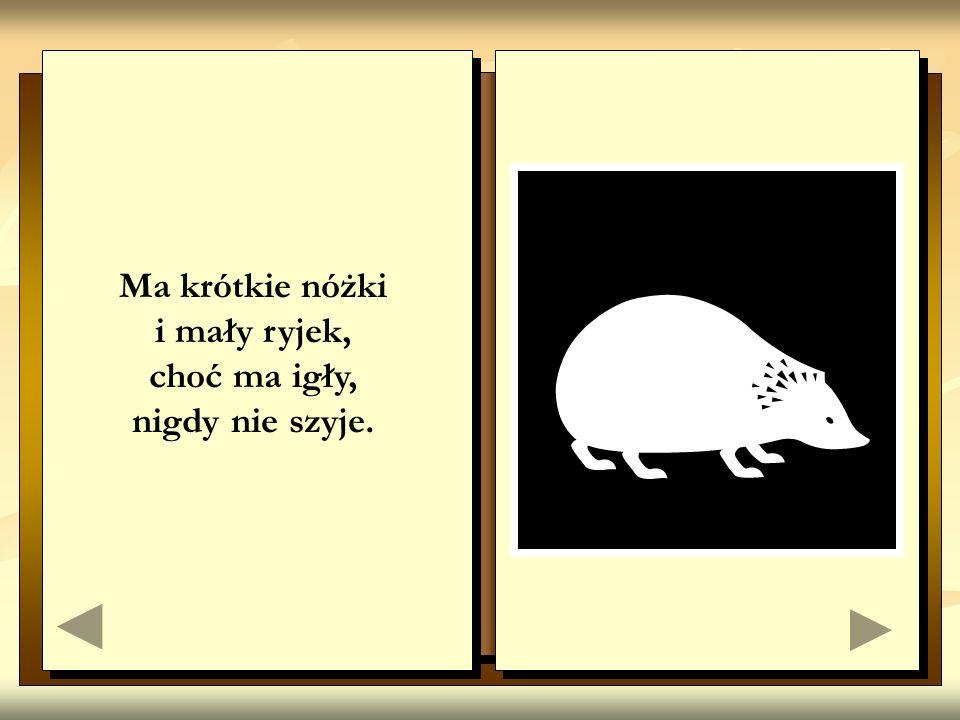 1. Żywa pułapka na myszy, dobrze widzi, dobrze słyszy. 2. W nocnej ciszy łowi myszy.