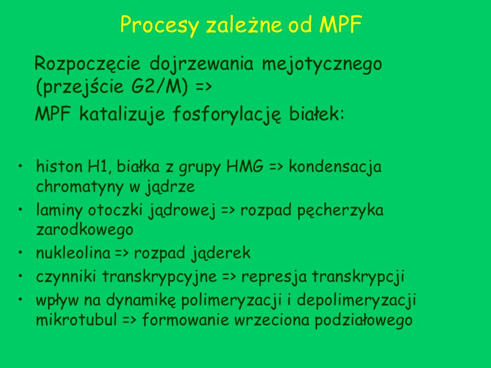 Procesy zależne od MPF Rozpoczęcie dojrzewania mejotycznego (przejście G2/M) => MPF katalizuje fosforylację białek: histon H1, białka z grupy HMG => k