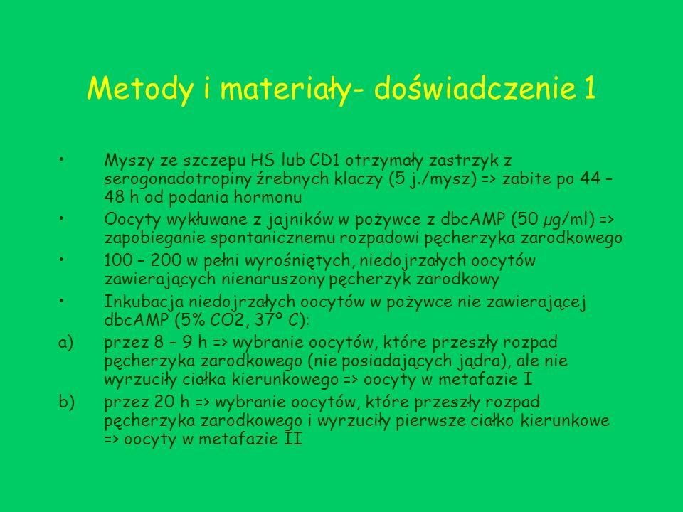 Metody i materiały- doświadczenie 1 Myszy ze szczepu HS lub CD1 otrzymały zastrzyk z serogonadotropiny źrebnych klaczy (5 j./mysz) => zabite po 44 – 4