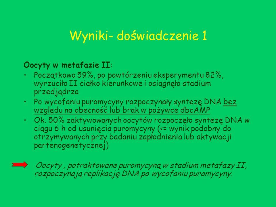 Wyniki- doświadczenie 1 Oocyty w metafazie II: Początkowo 59%, po powtórzeniu eksperymentu 82%, wyrzuciło II ciałko kierunkowe i osiągnęło stadium prz