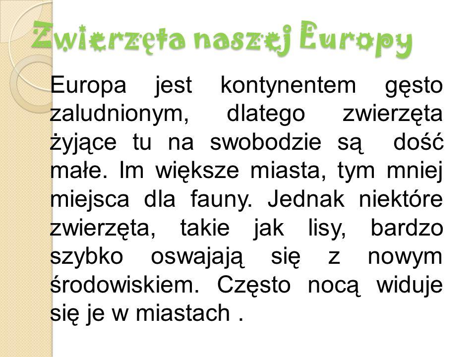 Zwierz ę ta naszej Europy Europa jest kontynentem gęsto zaludnionym, dlatego zwierzęta żyjące tu na swobodzie są dość małe.