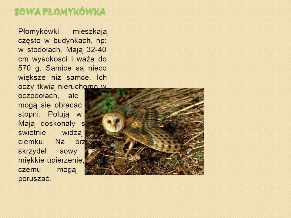 JELE Ń Jelenie są po żubrach największymi ssakami Europy. Żyją w lasach, żywią się trawą, wrzosem, i małymi krzewami. Samce, zwane bykami, mają do 112