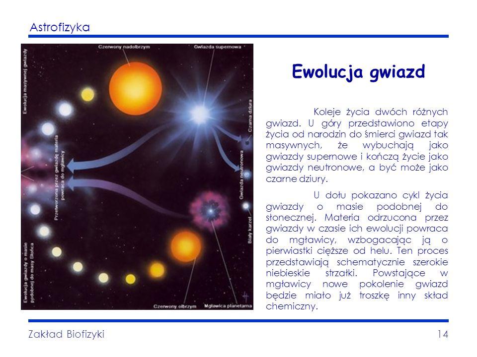 Astrofizyka Zakład Biofizyki14 Ewolucja gwiazd Koleje życia dwóch różnych gwiazd. U góry przedstawiono etapy życia od narodzin do śmierci gwiazd tak m