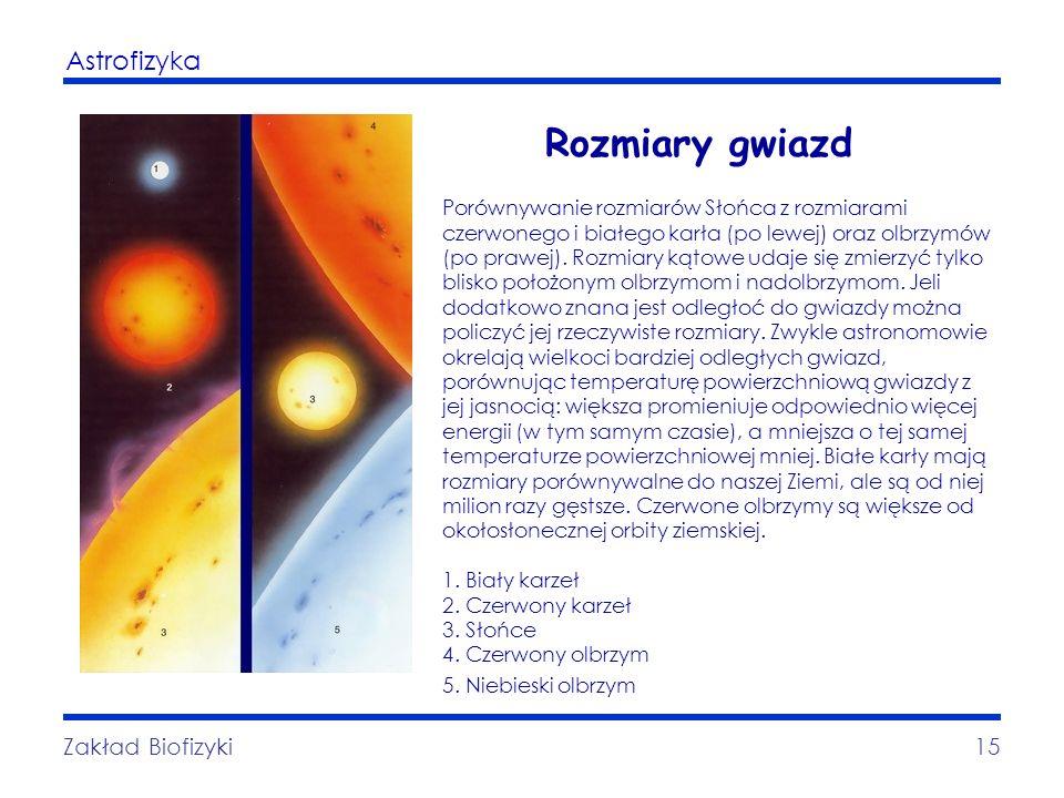 Astrofizyka Zakład Biofizyki15 Rozmiary gwiazd Porównywanie rozmiarów Słońca z rozmiarami czerwonego i białego karła (po lewej) oraz olbrzymów (po pra